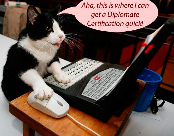 Cat Credentials, Diploma Mill, False Credentials